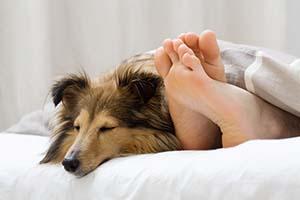 Pet Sitter of Boise Overnight Care